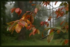 Осенняя палитра_3