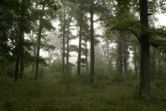 Туманное утро Воскресного дня_27 (4 сентября 2011 г.)