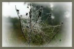 Жертвы паука