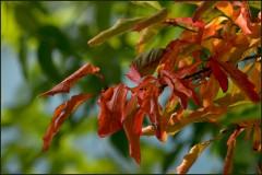 Осенние краски ( 1 сентября 2012 г.)