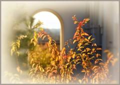 Пылающие ветки ( 14 октября 2012 г.)