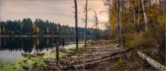 Жертвы лесного озера (снимок сделан 18 октября 2015 г.)