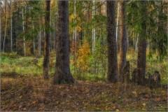 Лесной этюд (снимок сделан 3 октября 2016 г.)