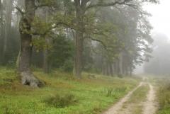 Туманное утро Воскресного дня_32 (4 сентября 2011 г.)