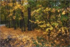 Осенняя дрема (снимок сделан 1 октября 2014 г.)