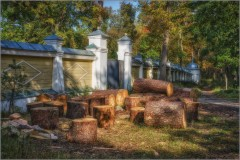 Заготовка дров к зиме (снимок сделан 19 сентября 2015 г.)