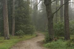 Туманное утро Воскресного дня_39 (4 сентября 2011 г.)