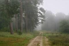 Туманное утро Воскресного дня_33 (4 сентября 2011 г.)