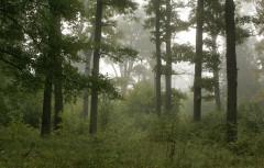 Туманное утро Воскресного дня_20 (4 сентября 2011 г.)
