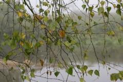 Туманное утро Воскресного дня_19 (4 сентября 2011 г.)