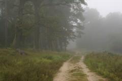 Туманное утро Воскресного дня_31 (4 сентября 2011 г.)