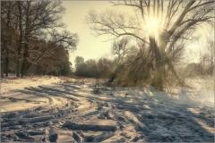 Теплый зимний свет ( Снимок сделан 26 января 2014 г.)