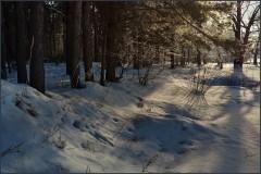 Пронизанная светом кромка леса ( 15 января 2013 г.)