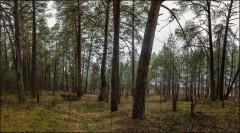 Лес в начале января ( Снимок сделан 9 января 2014 г.)