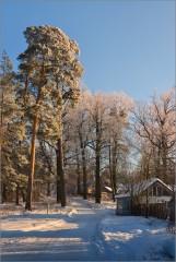 Покрытые инеем ( Снимок сделан 15 января 2013 г.)