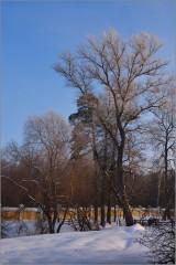 Зимний этюд ( Снимок сделан 15 января 2013 г.)