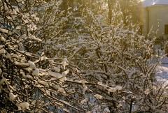 Гирлянды зимы