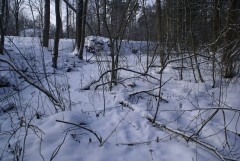 Под свежим покровом (12 февраля 2012 г.)