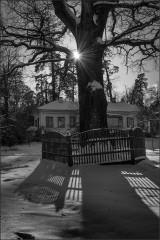 Скитской дуб и светотени ( Снимок сделан 26 января 2014 г.)