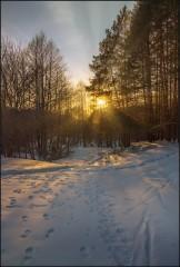 Пронзающий свет солнца ( Снимок сделан в 2013 г.)