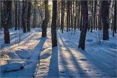 Светотени зимнего леса ( Снимок сделан 15 января 2013 г.)