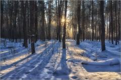 Лесные тени рождаемые солнцем ( Снимок сделан 15 января 2013 г.)