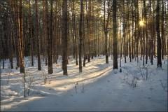 Зимний лес ( Снимок сделан 15 января 2013 г.)