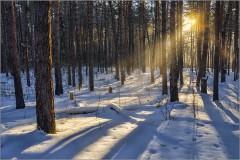 Солнечный луч в зимнем лесу ( Снимок сделан 15 января 2013 г.)