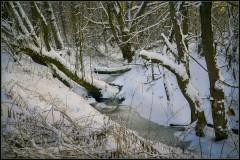 Лесные завалы ( 9 декабря 2012 г.)