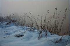 Зимние травы ( 9 декабря 2012 г.)