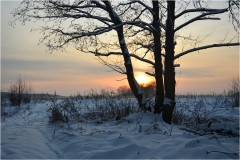 Три дерева ( 9 декабря 2012 г.)