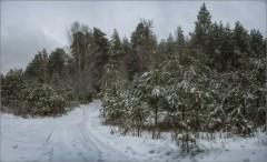 Снегом укутанный лес (снимок сделан 29 января 2015 г.)
