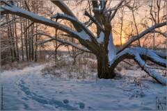 Раскидало древо, ветки на закате... (снимок сделан 9 декабря 2012 г.)