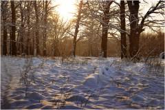 Снежные барханы ( 9 декабря 2012 г.)
