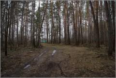 Лес после зимы ( Снимок сделан 21 апреля 2013 г.)