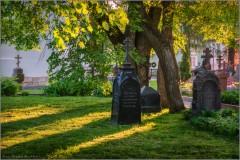 Теплый свет Оптинского вечера (снимок сделан 20 мая 2014 г.)