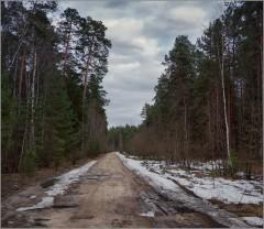 Весна в лесу ( Снимок сделан 21 апреля 2013 г.)
