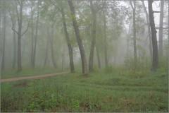 Дорога в туманном лесу (снимок сделан 6 мая 2012 г.)