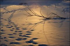 На золотом снегу ( 10 марта 2013 г.)