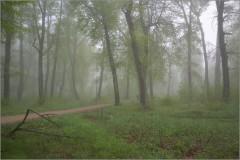 Утром ранним ( Снимок сделан 6 мая 2012 г.)