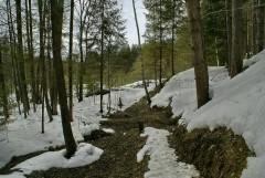 Мартовский лес ( 21 марта 2011 г. )
