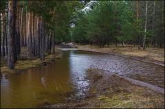 Разлив коснувшийся лесных дорог ( Снимок сделан 21 апреля 2013 г.)