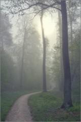 Поворот в туманный лес (снимок сделан 6 мая 2012 г.)