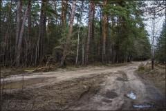 Лесные дороги ( Снимок сделан 21 апреля 2013 г.)
