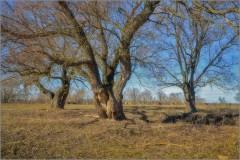 Старые деревья (снимок сделан 15 марта 2015 г.)