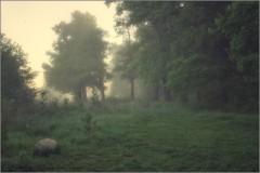 В тишине туманного леса (снимок сделан 21 мая 2014 г.)
