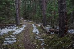 Осколки зимы в лесной чаще ( Снимок сделан 21 апреля 2013 г.)