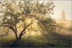 Как мёд, разливается утренний свет...(снимок сделан 21 мая 2014 г.)