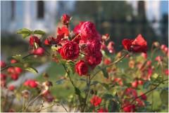 Осенних дней, цветов очарованье