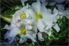 Сплетение цветов (снимок сделан 5 мая 2015 г.)